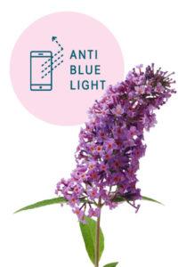 Schmetterlingsflieder mit Anti Blue Light Effekt