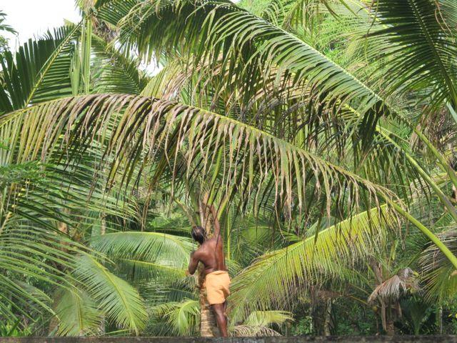 Faires Kokosöl aus Indien
