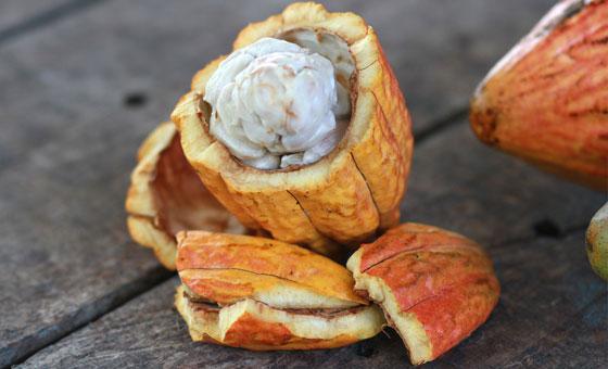 im-naturkosmetik-fairtrade-produzent-kakaobutter-indonesien-kakao-frucht
