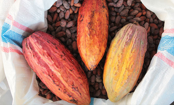 im-naturkosmetik-fairtrade-produzent-kakaobutter-indonesien-kakao