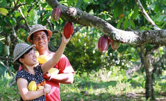 im-naturkosmetik-fairtrade-produzent-kakaobutter-indonesien-ernte-kakao