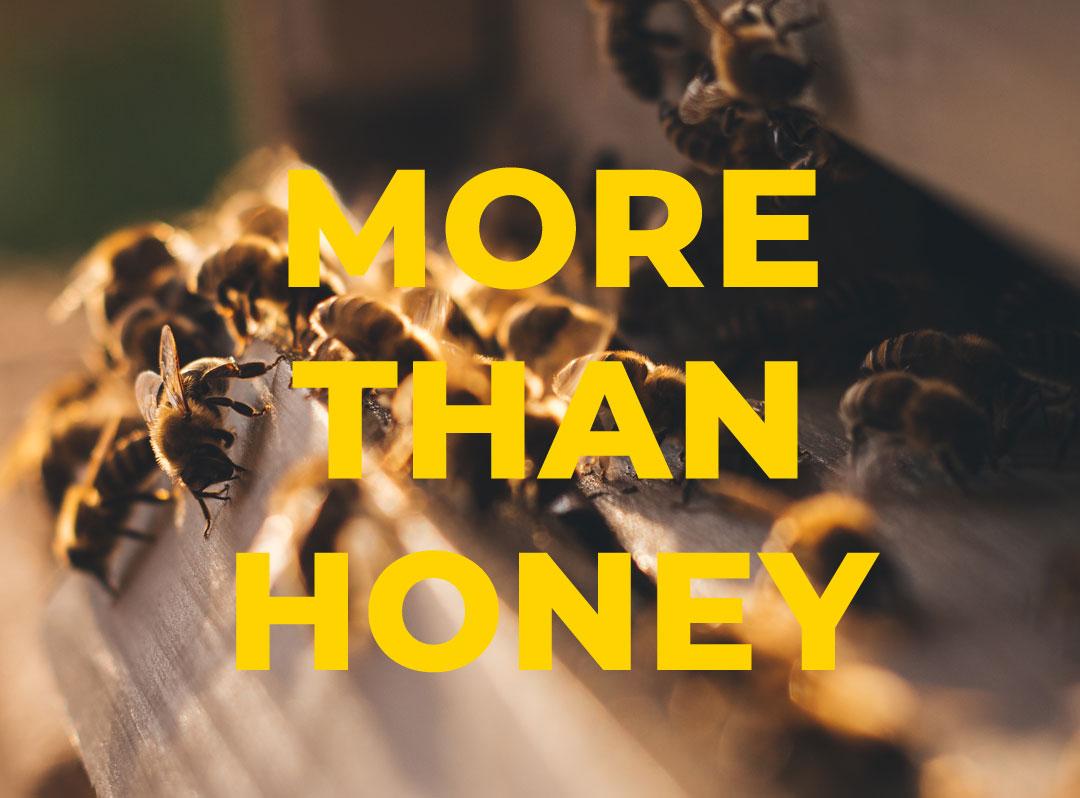 Meins, deins, nix mehr? Der optimistische Filmsalon zeigt More Than Honey. Eine Kooperation vin i-m Naturkosmetik mit Hackesche Höfe Kino und Bio Company.