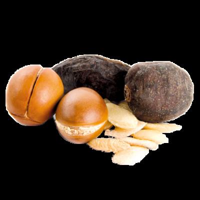 Die Argan Nuss ist Rohstoff und als Arganöl natürlicher Inhaltsstoff von i+m Naturkosmetik - fair bio vegan.