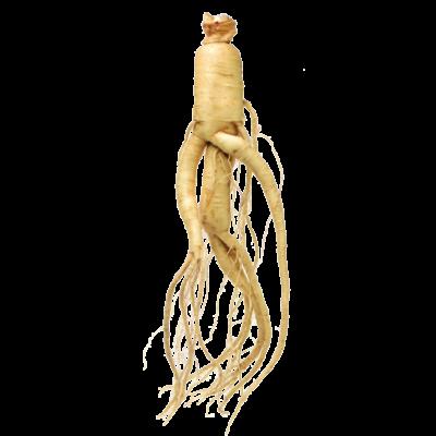 Die Wurzel der Ginseng Pflanze ist Rohstoff und natürlicher Inhaltsstoff von i+m Naturkosmetik - fair bio vegan.