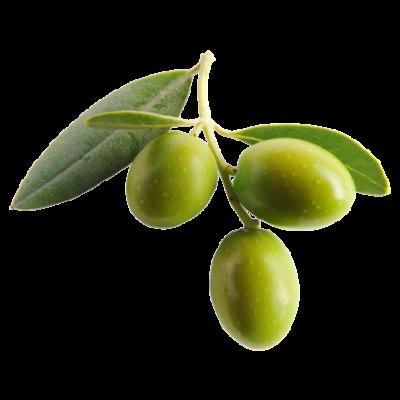 Die Olive ist Rohstoff und natürlicher Inhaltsstoff von i+m Naturkosmetik - fair bio vegan.