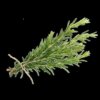 Die Rosmarin Pflanze ist Rohstoff und natürlicher Inhaltsstoff von i+m Naturkosmetik - fair bio vegan.