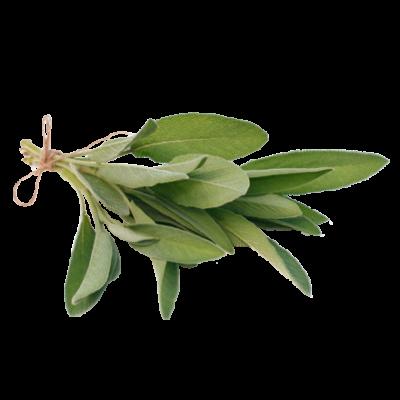 Die Salbei Pflanze ist Rohstoff und natürlicher Inhaltsstoff von i+m Naturkosmetik - fair bio vegan.