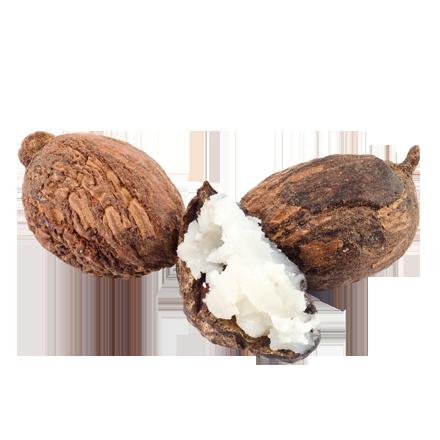 Sheabutter aus der Sheanuss ist Rohstoff und natürlicher Inhaltsstoff von i+m Naturkosmetik - fair bio vegan.